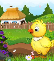 Little chicken on a green meadow