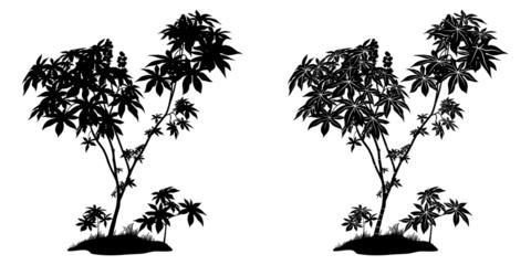 Castor Plant Contours and Silhouette