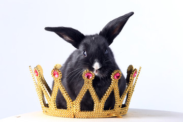 Rabbit in the crown