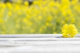 菜の花とテーブル
