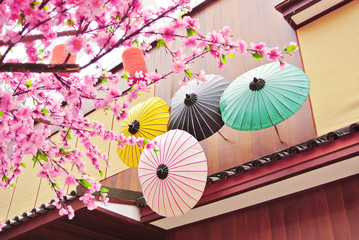 Sakura flower with wooden umbrella and house background