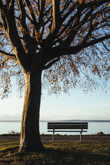 Beech tree in autumn and park bench with a view over Puget Sound at dusk.