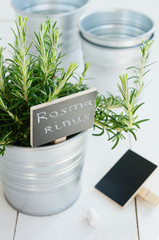 Rosemary herb in a planter with blackboard