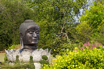 Anceint  head buddha in forest