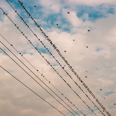 birds on power line cable