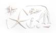 Maritimer Hintergrund in Weiß mit Muscheln, Fische, Anker - 80450176