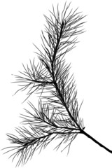 pine tree black branch isolated illustration