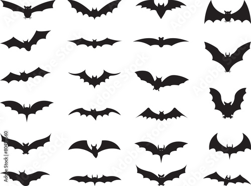 Bats collection isolated on white - 80450560