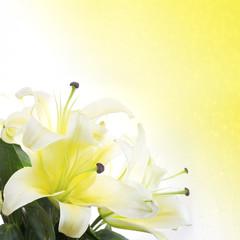 closeup lily