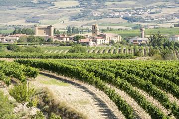 Viñedos con Sajazarra al fondo, La Rioja (España)