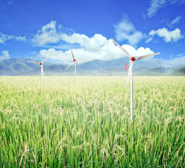Rice field and wind turbines.