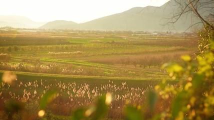 Fertile green fields at sunset