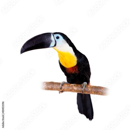 Fotobehang Toekan Channel-billed toucan isolated on white