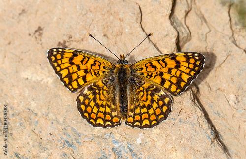 Staande foto Vlinder Kelebek