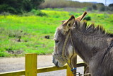 Donkey and fence