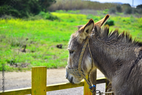 Papiers peints Ane Donkey and fence