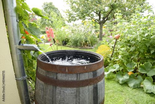 Regentonne im Garten - 80460715