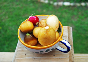 Cleaned Yellow Radishes and Red Radishes in a Tea Cup