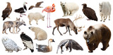 Set of North American animals. Isolated on white