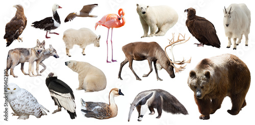 Fotobehang Ijsbeer Set of North American animals. Isolated on white