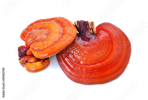 In de dag Kruiden Lingzhi Mushroom Ganoderma Lucidum Isolated on white background