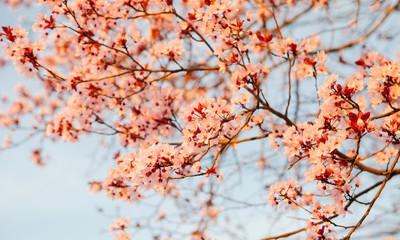 Apple branch full of flowers
