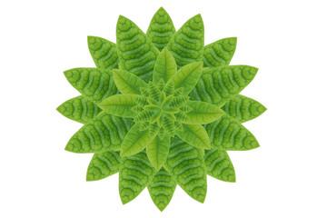 Idea form leaf.(Flower concept)