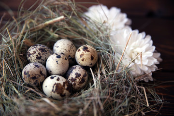 Easter quail eggs in the nest on rustic wooden background