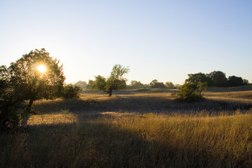 meadow in the rays of the rising sun