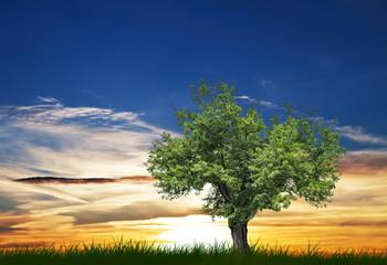 amanecer en el campo verde