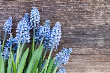 Muscari flowers on table