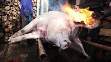Burning slaughtered pig face