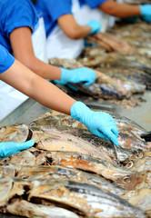 the cutting of a tuna fish in factory, tuna fish processing