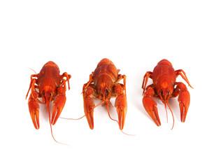 Three boiled crawfish