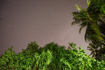 Night sky of tropical island with palms in the wind