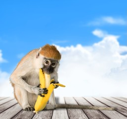 Monkey. The monkey sits and eats banana. isolated on white