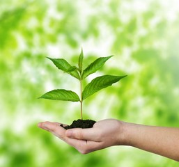 Environmental. Conceptual environment photo of small plant in