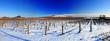 Leinwanddruck Bild - Vineyard landscape in winter