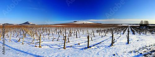 Leinwanddruck Bild Vineyard landscape in winter