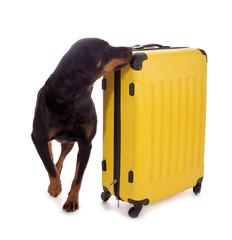 Hund schnüffelt an Koffer