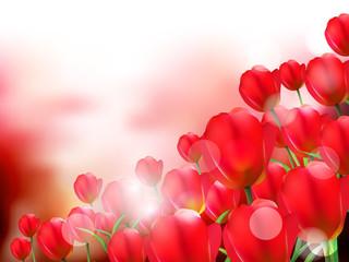 チューリップ 花 背景