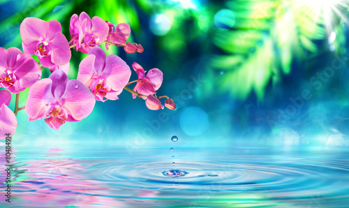orchid in zen garden with droplet on pond - 80484914