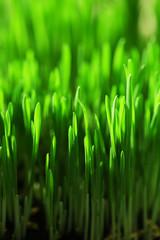 Wet grass close-up background