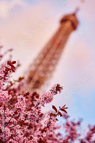 Fotobehang Kersen Spring in Paris