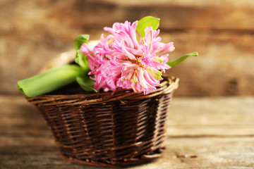 Beautiful hyacinth flower on wooden background