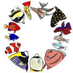 熱帯魚 海水 淡水 円 コピースペース
