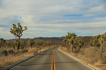 Joshua Tree National Park Roadway