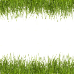 photo grass green isolate on a white background