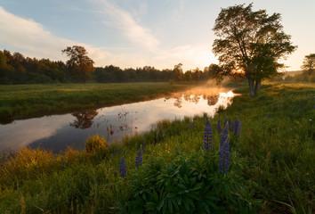 evening sunlight on the pond