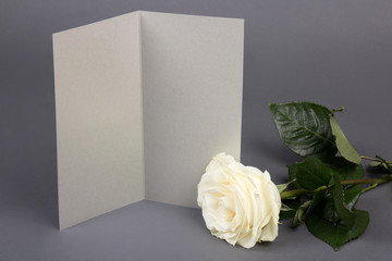 blank gift card and beautiful white rose over grey